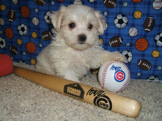 baseball_4