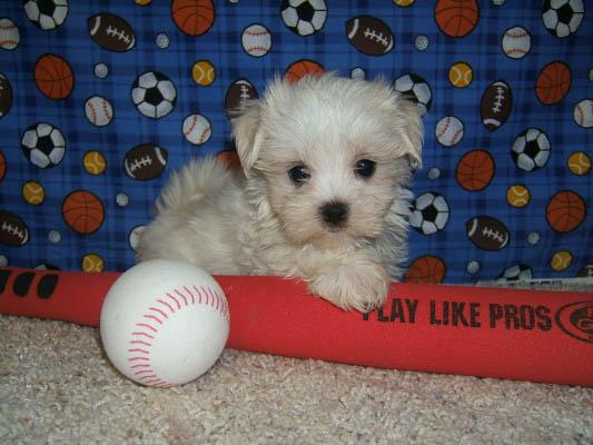 baseball_5